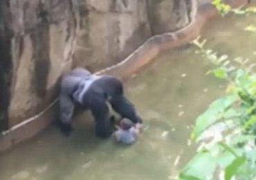 Tragic shooting of Gorilla yet another example of White Privilege, says BlackLivesMatter