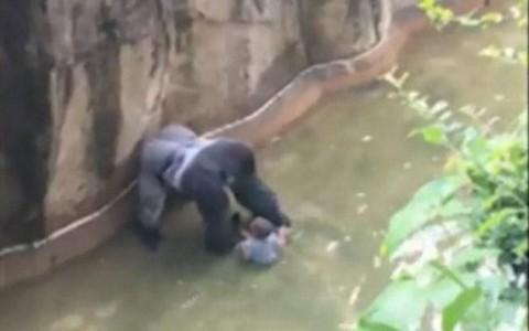 GorillaBlackKid